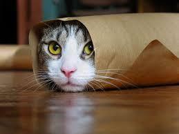 خانمهای باردار از گربه دوری کنند