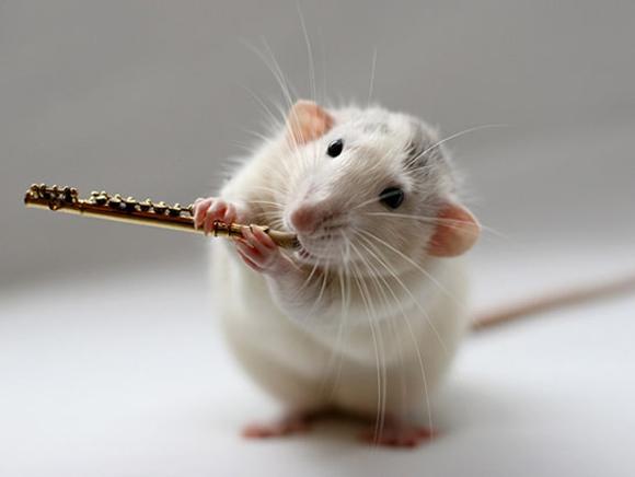 قالیشویی موشها