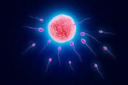 نقش مردان در تخمک گذاری زنان!