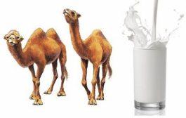 ارزش غذایی دوغ شتر