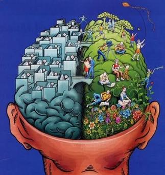 تفاوت نیمکره های مغز