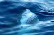 آب هراسی