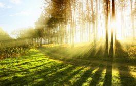 تاثیر فضای سبز بر سلامت