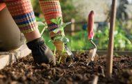 فواید باغبانی؛ از ضدافسردگی تا تناسب اندام