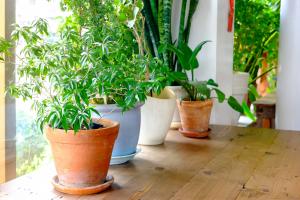 تاثیر گیاهان آپارتمانی در سلامت روان